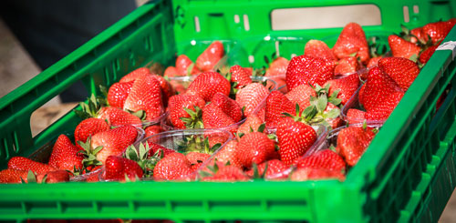 home_fragole_500x245